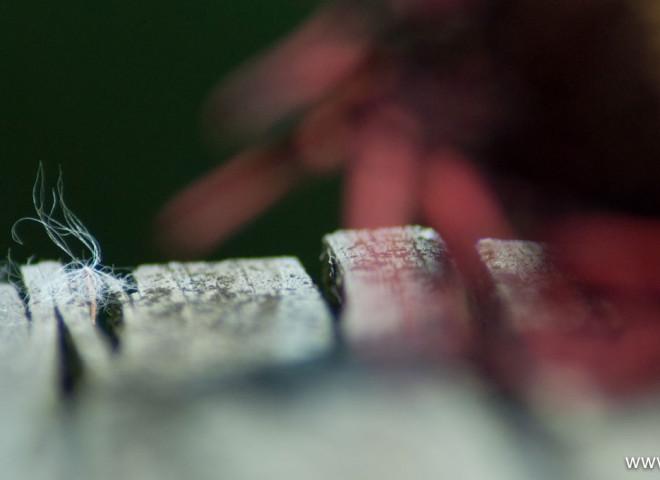 Captured Milkweed