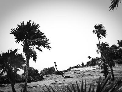 Stark Mexican Landscape