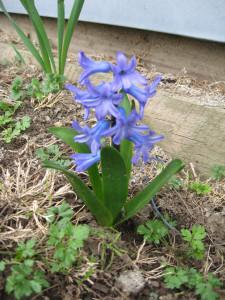 5springflowers1